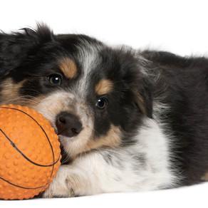 Puppy Management