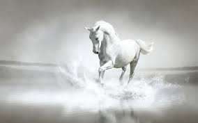 """April Flowers Bring.... The 'Sun"""" of God Riding on His White Horse- by Margaret Stearns"""