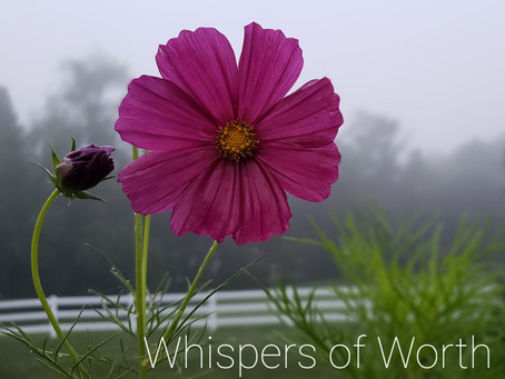 Copy from May 19- Whispers of Worth- by Jess Hall