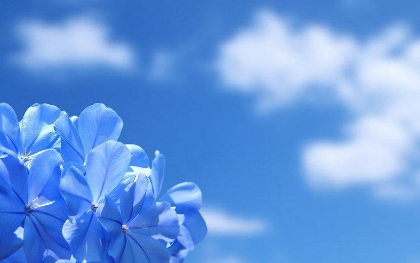paisagem-flores-azuis-0.jpg