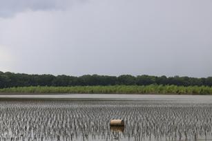 MC Brooks. Forgotten Backwater Flood. Photography. 26x20 inches, $200.jpg
