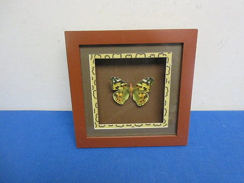 Dimensional butterfly in a wall shadow box