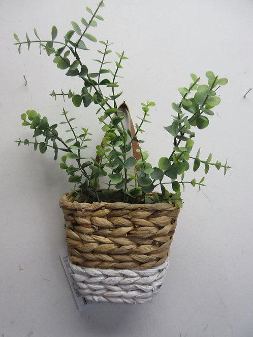 Small flat hanging basket with eucalyptus