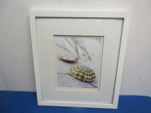 "White frame print of 2 sea shells, 15x17"""