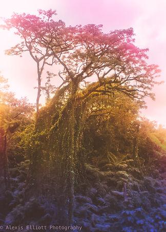 Psychedelic Jungle 2.jpg