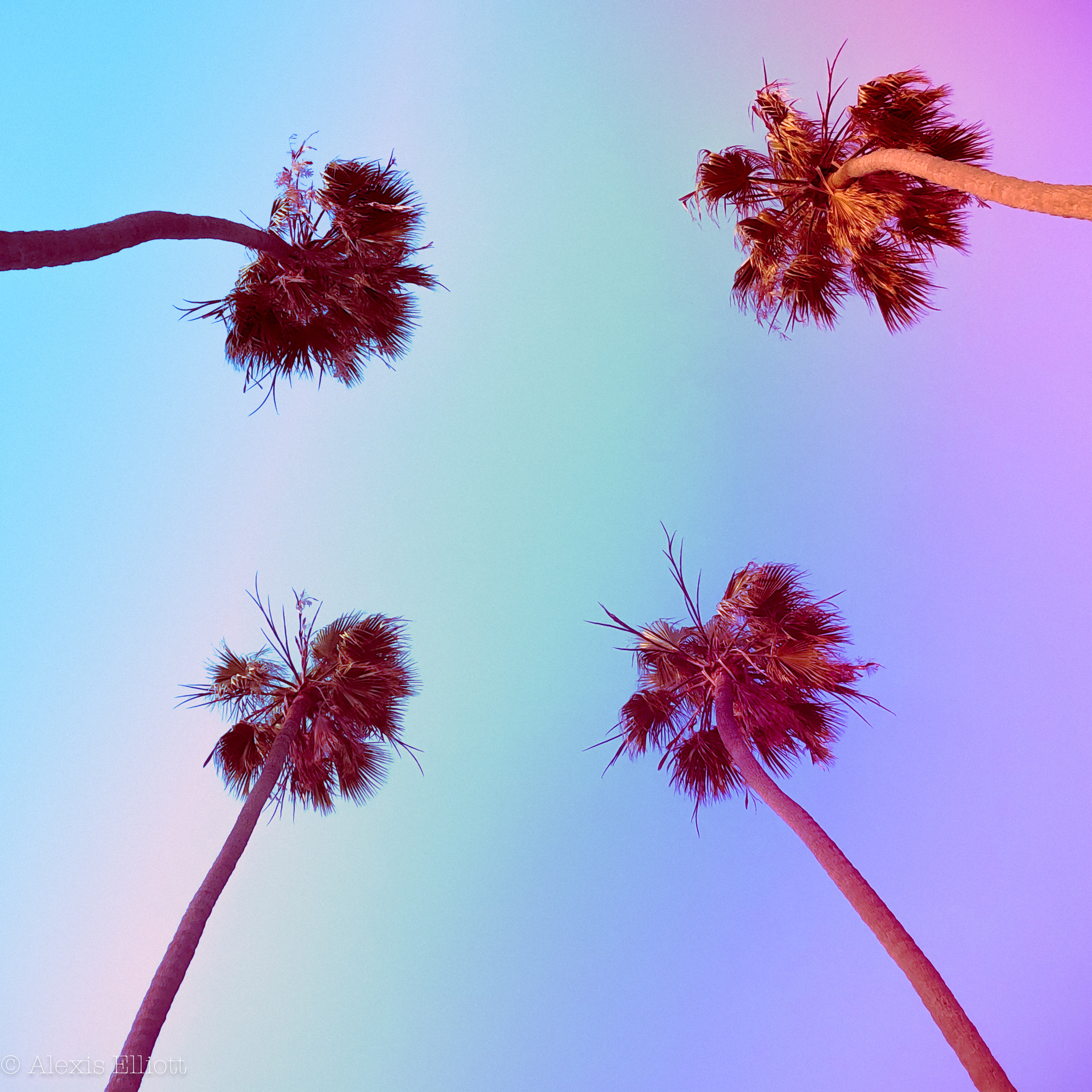 Crystalline Palms