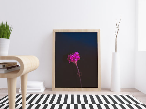 Lonely Photography Print