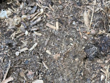 Soil 101 - The Basics