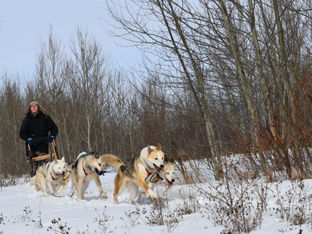 The Heart Of A Musher
