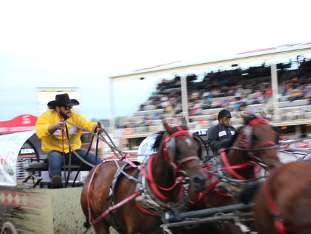 Calgary Stampede Chuckwagon Tarp Auction