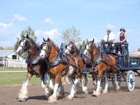Vermilion Ag Society Hosting Alberta Draft Horse Classic
