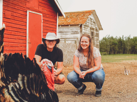 Chatsworth Farm Hosting Visitors For Second Year For Alberta's Open Farm Days