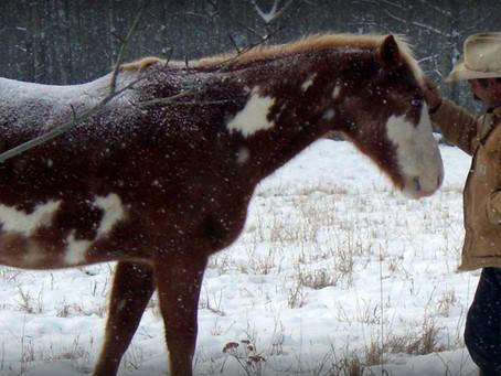 Tom Durocher - The Canadian Horse Whisperer