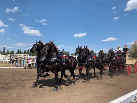 Alberta Draft Horse Classic