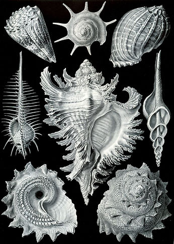 Ernst Heinrich Philipp August Haeckel