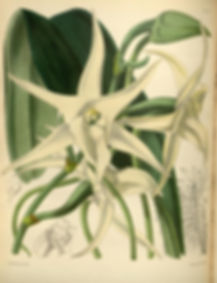 151_A_second_century_of_orchidaceous_pla