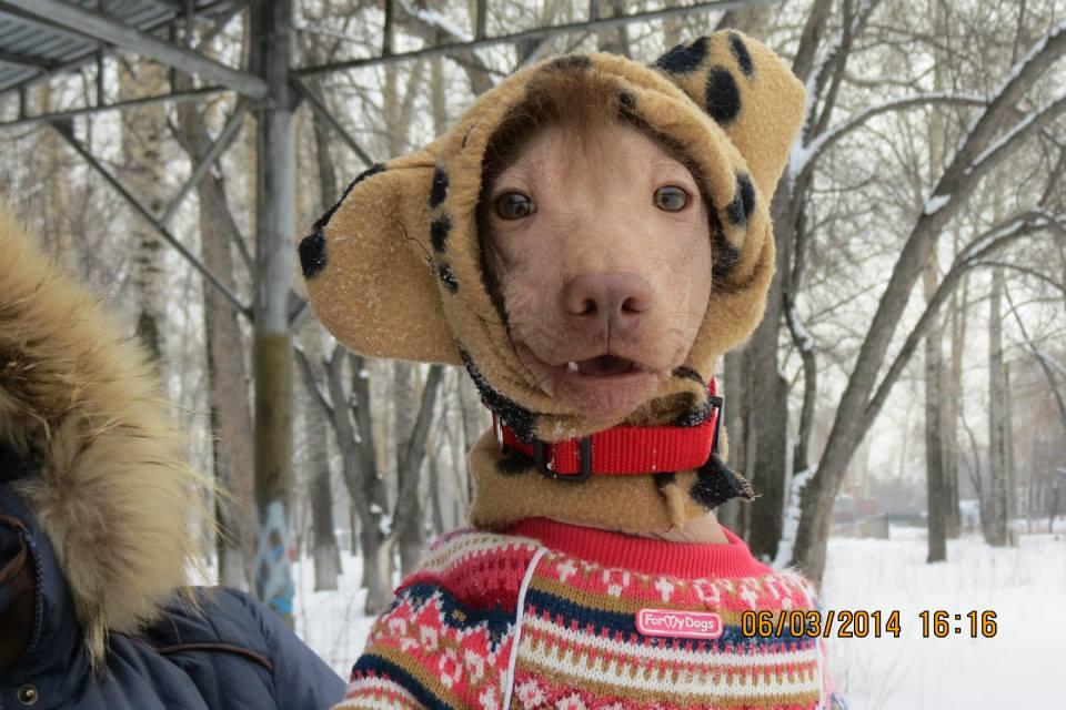 Зима! Лишь бы ушки не отморозить!