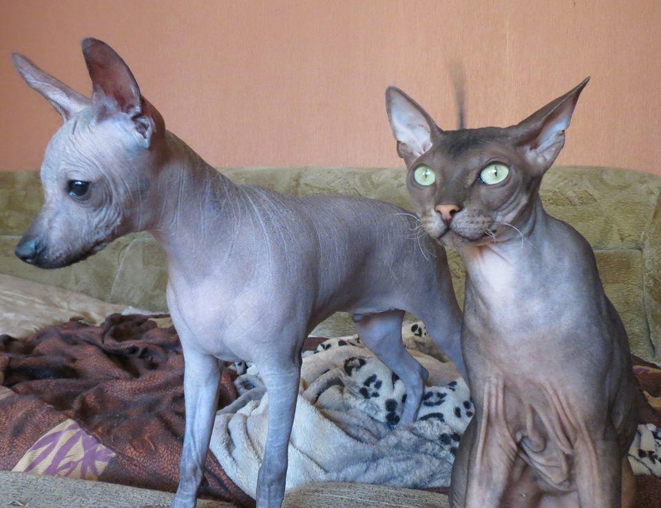 Эргин и кошка.jpg