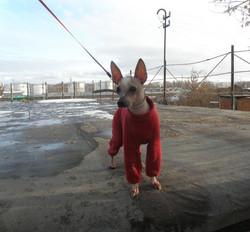 Афина-на-прогулке-в-красном-костюме