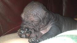 Деметра-спит-на-лапе.jpg