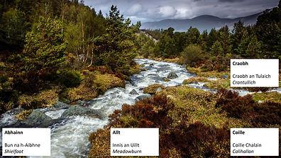 River-Forest.jpg