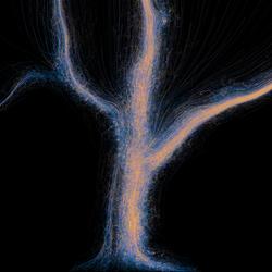 A tree of air & light