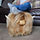 Thumbnail: Highland Cow Footstool - Honey