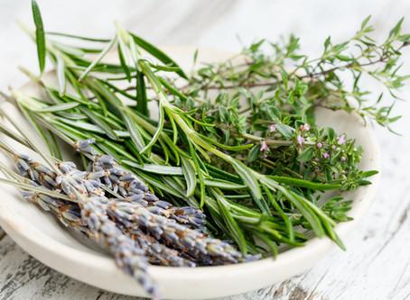 20 Antiseptic Herbs