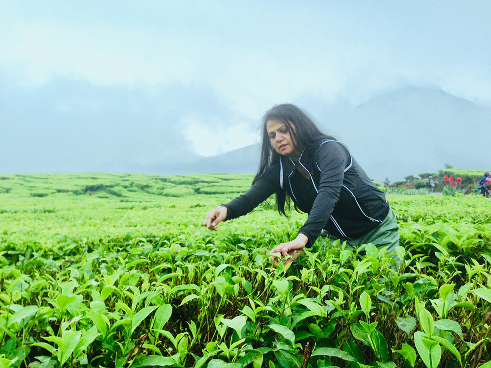 Nirmala Spice Plantation1.jpeg