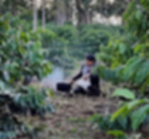 Nirmala Narine procuring Spices, In the misty spice plantations in Banda Islands