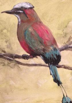 National Bird of San Salvador
