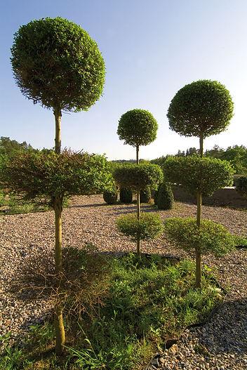 Jardin-DSCF0051.jpg