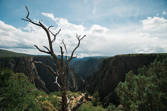 Tree Over Black Canyon