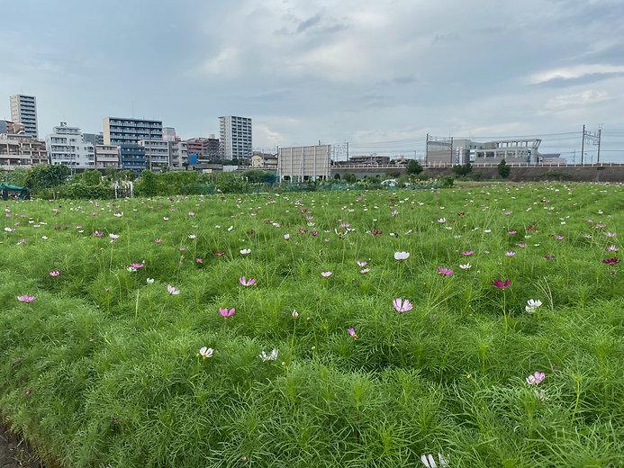 07292021東武東上線.jpg