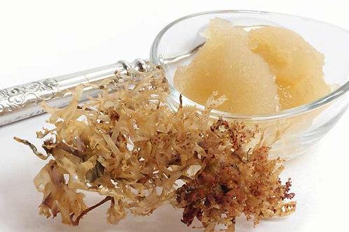 Sea Moss Gel (8 oz.)