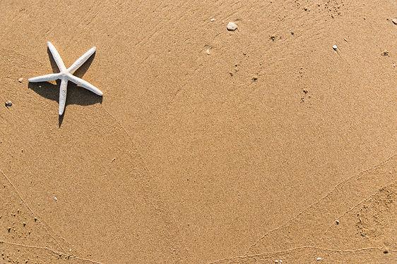 background-beach-daylight-1451360.jpg