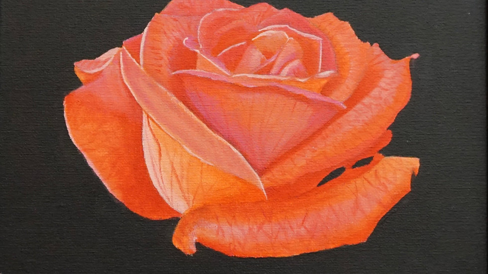 Orange Rose Painting