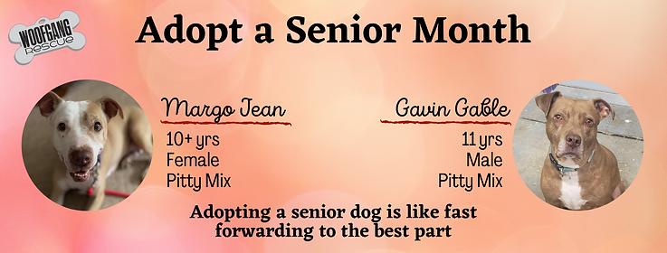 Adopt Senior Month.png