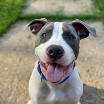 Turbo Jack - Adopted