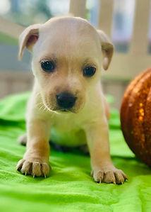 Dopey Pup2.jpg