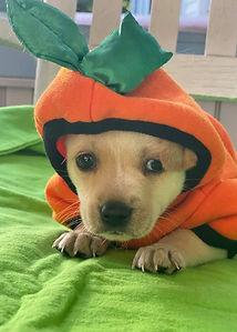 Dopey Pup1.jpg