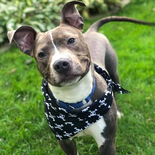 Bongo - Adopted