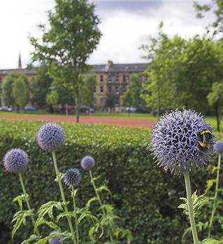 0624.1362.1732.5001.5277.Bee in Glasgow.jpg-640x480.jpg