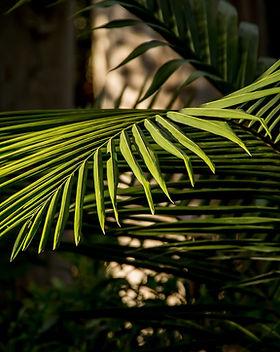 palm-1054705_1920.jpg