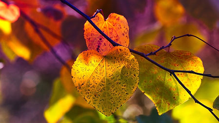 autumn-leaves-3813741_1920.jpg