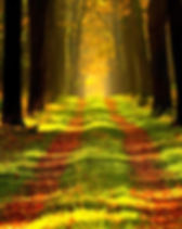 forest-868715_1280.jpg
