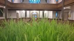 Fields of Faith