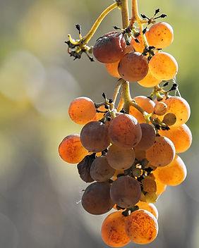 grape-3803110_1920.jpg