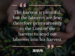 Commanded To Pray For Laborers To Be Sent
