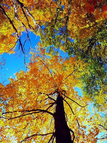 Park national d'Oka/Oka National Park (Quebec) Canada  Le parc fait partie à la fois de la région naturelle des basses-terres du Saint-Laurent et de celle des collines Montérégiennes. Les Montérégiennes sont constituées des roches les plus jeunes du Québec. Le parc abrite plusieurs associations végétales : la colline du Calvaire est l'habitat de l'érablière à chêne rouge; ailleurs dans le parc, on retrouve une érablière à caryer, une érablière argentée, une pinède et même une magnifique chênaie.